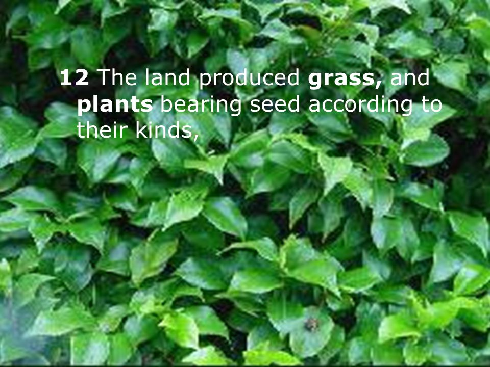 12 The land produced grass, and plants bearing seed according to their kinds,