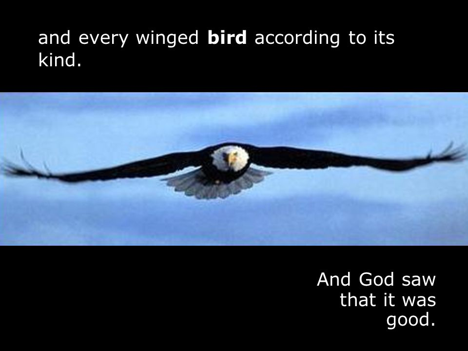 j And God saw that it was good. j and every winged bird according to its kind.
