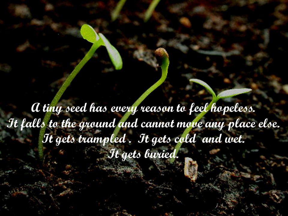 A tiny seed has every reason to feel hopeless.