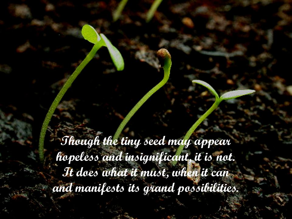 Though the tiny seed may appear hopeless and insignificant, it is not.