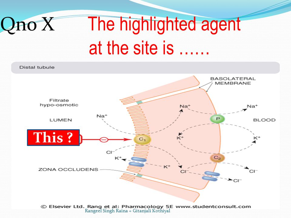 Qno X The highlighted agent at the site is …… This ? Rangeel Singh Raina + Gitanjali Kothiyal