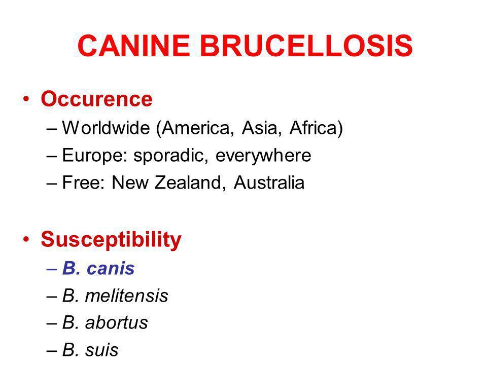 CANINE BRUCELLOSIS Occurence –Worldwide (America, Asia, Africa) –Europe: sporadic, everywhere –Free: New Zealand, Australia Susceptibility –B.