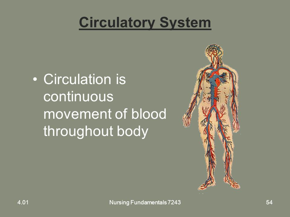 Nursing Fundamentals 724354 Circulatory System Circulation is continuous movement of blood throughout body 4.01