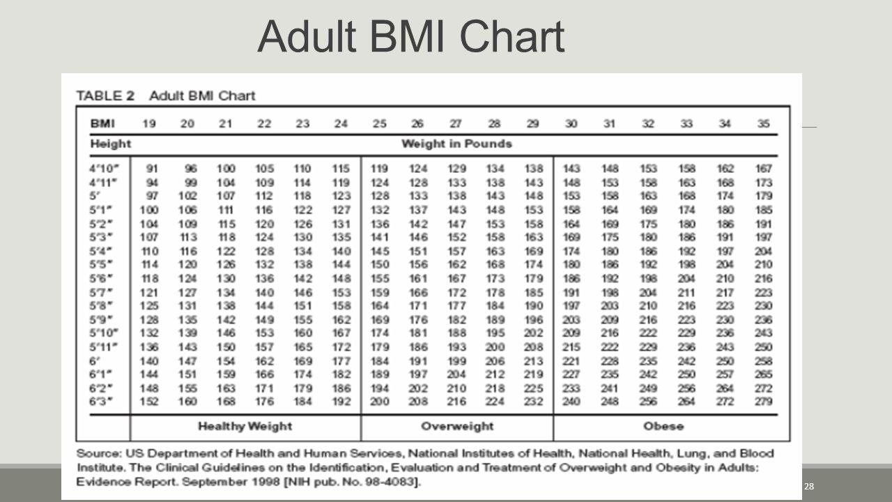 Adult BMI Chart 28