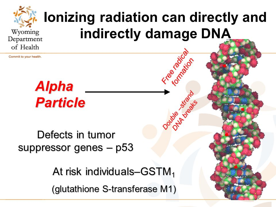 Ionizing radiation can directly and indirectly damage DNA Alpha Particle Defects in tumor suppressor genes – p53 At risk individuals–GSTM 1 (glutathione S-transferase M1) Double –strand DNA breaks Free radical formation