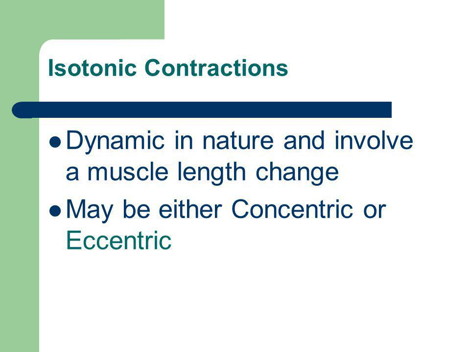 Isotonic Contractions Dynamic in nature and involve a muscle length change May be either Concentric or Eccentric