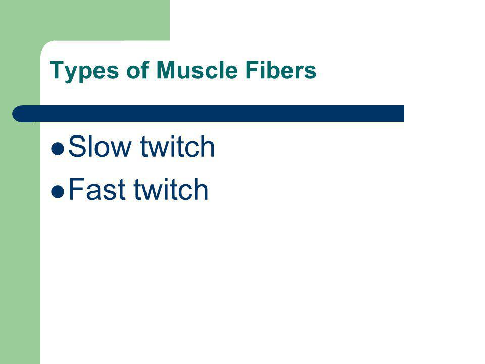 Types of Muscle Fibers Slow twitch Fast twitch