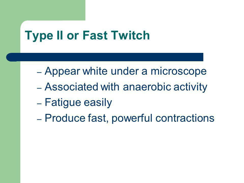 Type II or Fast Twitch – Appear white under a microscope – Associated with anaerobic activity – Fatigue easily – Produce fast, powerful contractions