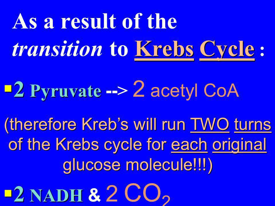 The Krebs Cycle:  Occurs in the matrix of the mitochondria Pyruvate from glycolysis is converted to acetyl Co A and metabolized Krebs Cycle As a resu