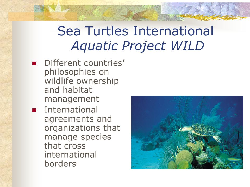 Sea Turtles International Aquatic Project WILD Different countries' philosophies on wildlife ownership and habitat management International agreements and organizations that manage species that cross international borders