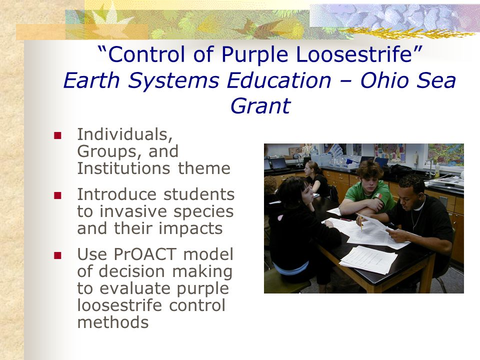 Control of Purple Loosestrife Earth Systems Education – Ohio Sea Grant Individuals, Groups, and Institutions theme Introduce students to invasive species and their impacts Use PrOACT model of decision making to evaluate purple loosestrife control methods