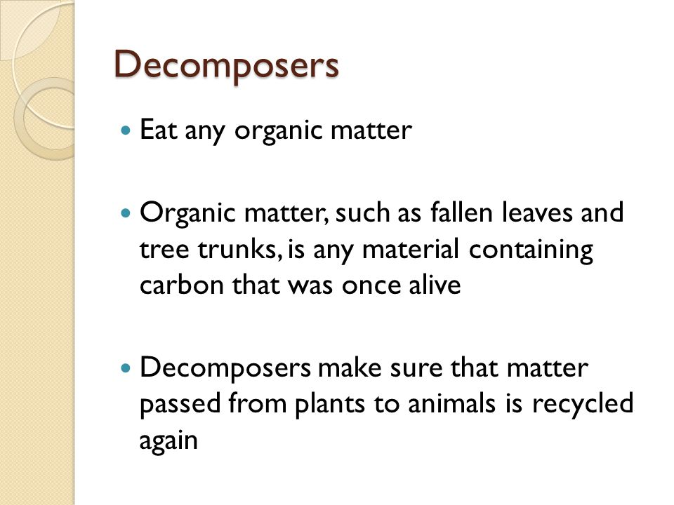 Decomposers Eat any organic matter Organic matter, such as fallen leaves and tree trunks, is any material containing carbon that was once alive Decomposers make sure that matter passed from plants to animals is recycled again