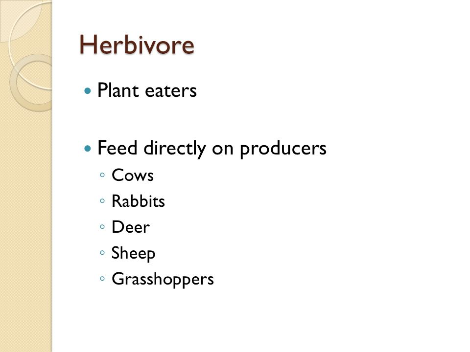 Herbivore Plant eaters Feed directly on producers ◦ Cows ◦ Rabbits ◦ Deer ◦ Sheep ◦ Grasshoppers