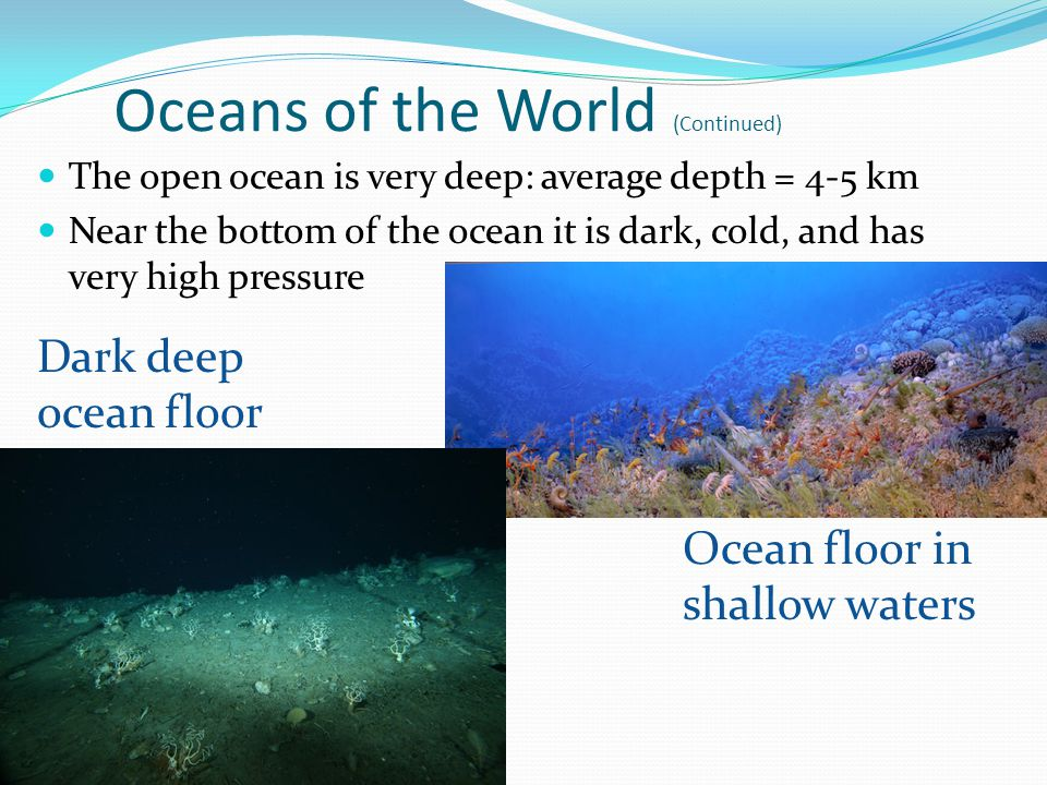 Oceans of the World (Continued) The open ocean is very deep: average depth = 4-5 km Near the bottom of the ocean it is dark, cold, and has very high pressure Dark deep ocean floor Ocean floor in shallow waters