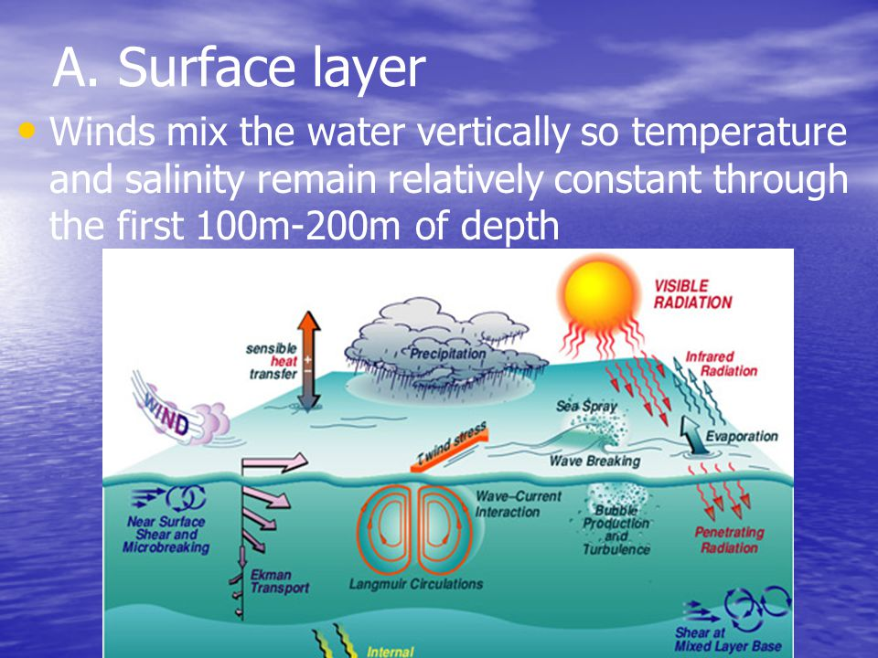 A. Surface layer Winds mix the water vertically so temperature and salinity remain relatively constant through the first 100m-200m of depth