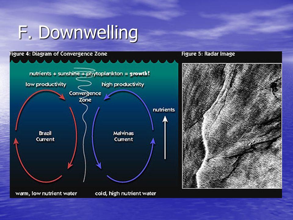 F. Downwelling