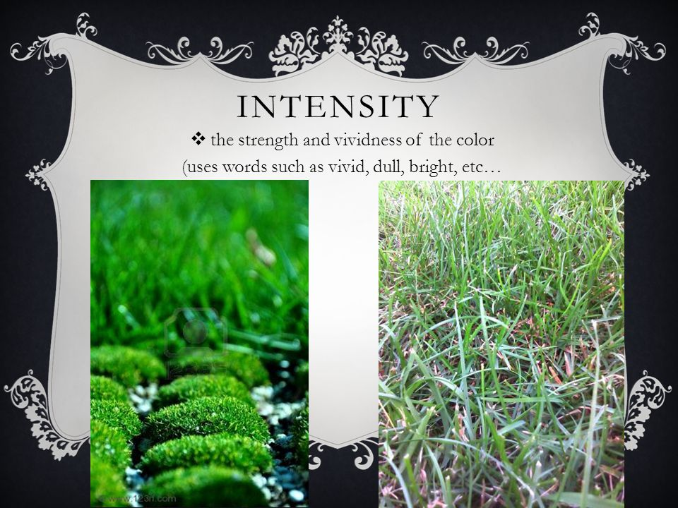 INTENSITY  the strength and vividness of the color (uses words such as vivid, dull, bright, etc…