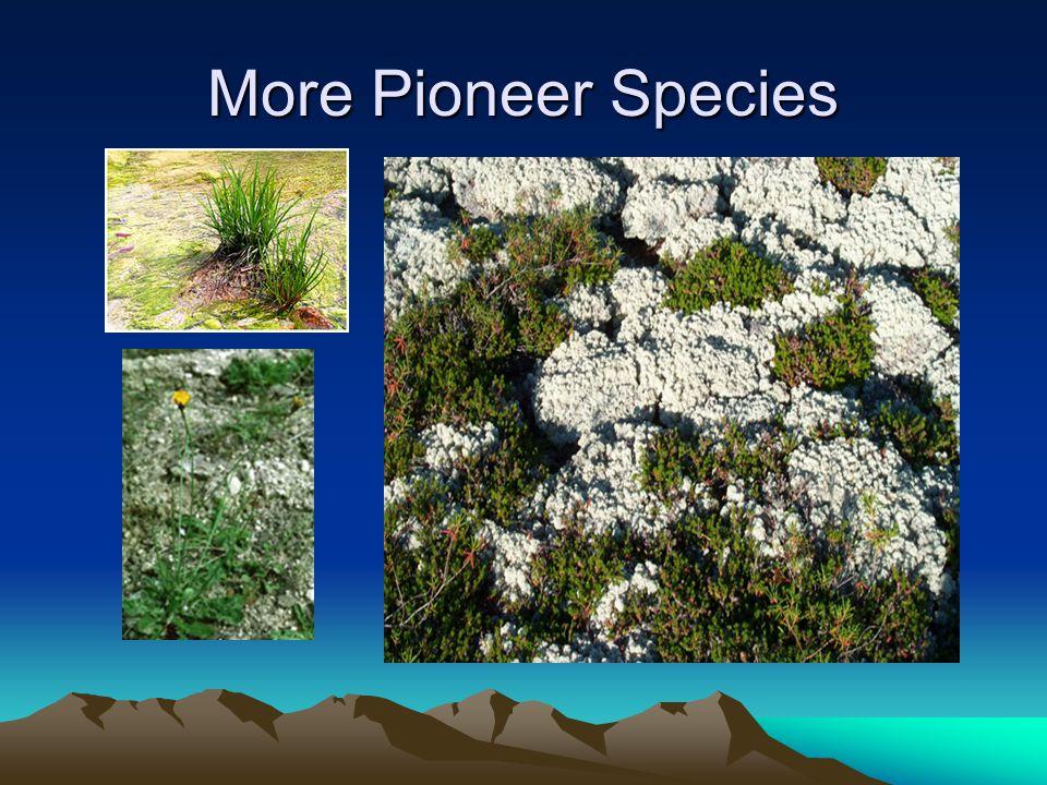 More Pioneer Species