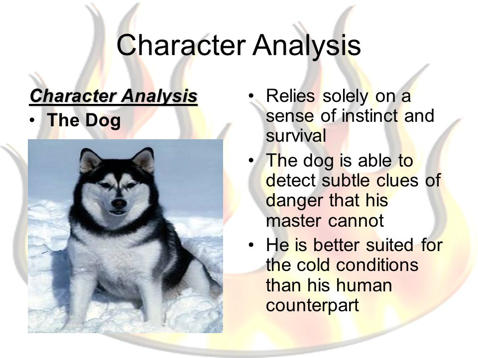 Character Analysis The Dog Relies solely on a sense of instinct and survival The dog is able to detect subtle clues of danger that his master cannot H