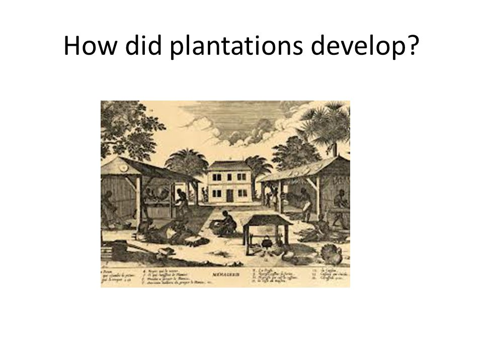How did plantations develop