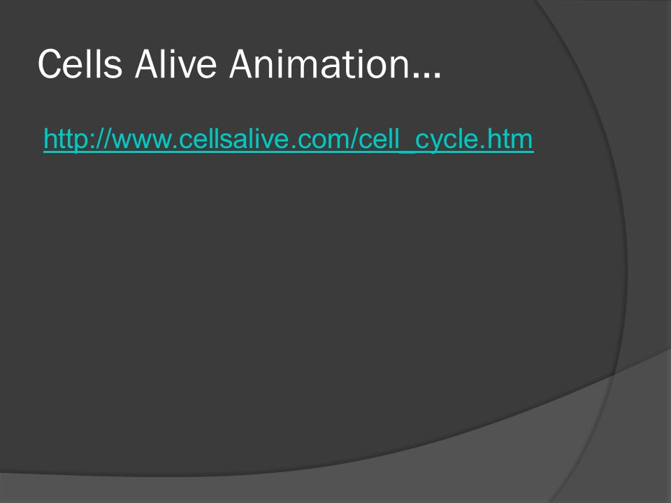 Cells Alive Animation… http://www.cellsalive.com/cell_cycle.htm