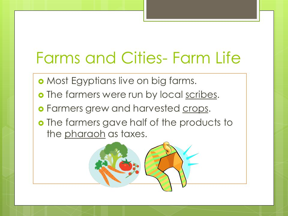 Farms and Cities- Farm Life  Most Egyptians live on big farms.  The farmers were run by local scribes.  Farmers grew and harvested crops.  The far