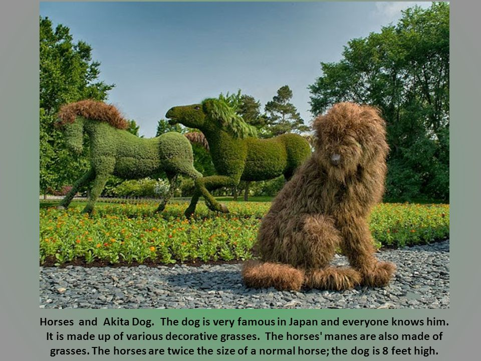Horses and Akita Dog.The dog is very famous in Japan and everyone knows him.