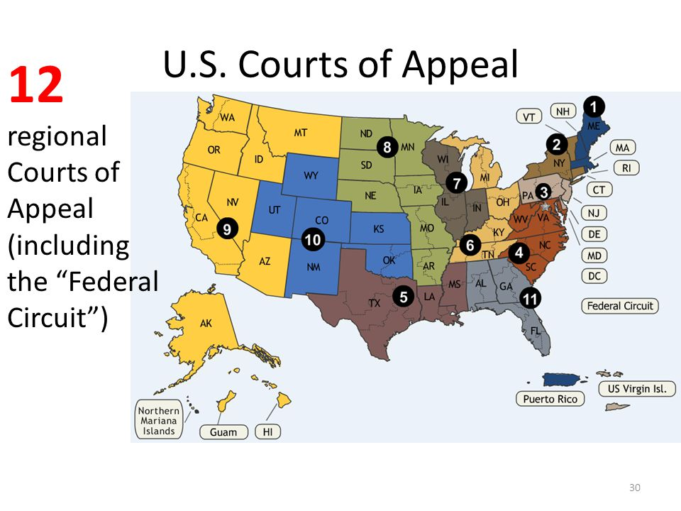 U.S. Courts of Appeal 30 12 regional Courts of Appeal (including the Federal Circuit )