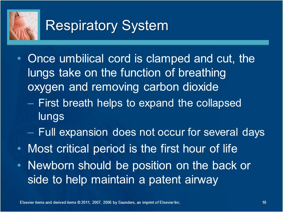 Respiratory System Once umbilical cord is clamped and cut, the lungs take on the function of breathing oxygen and removing carbon dioxide –First breat