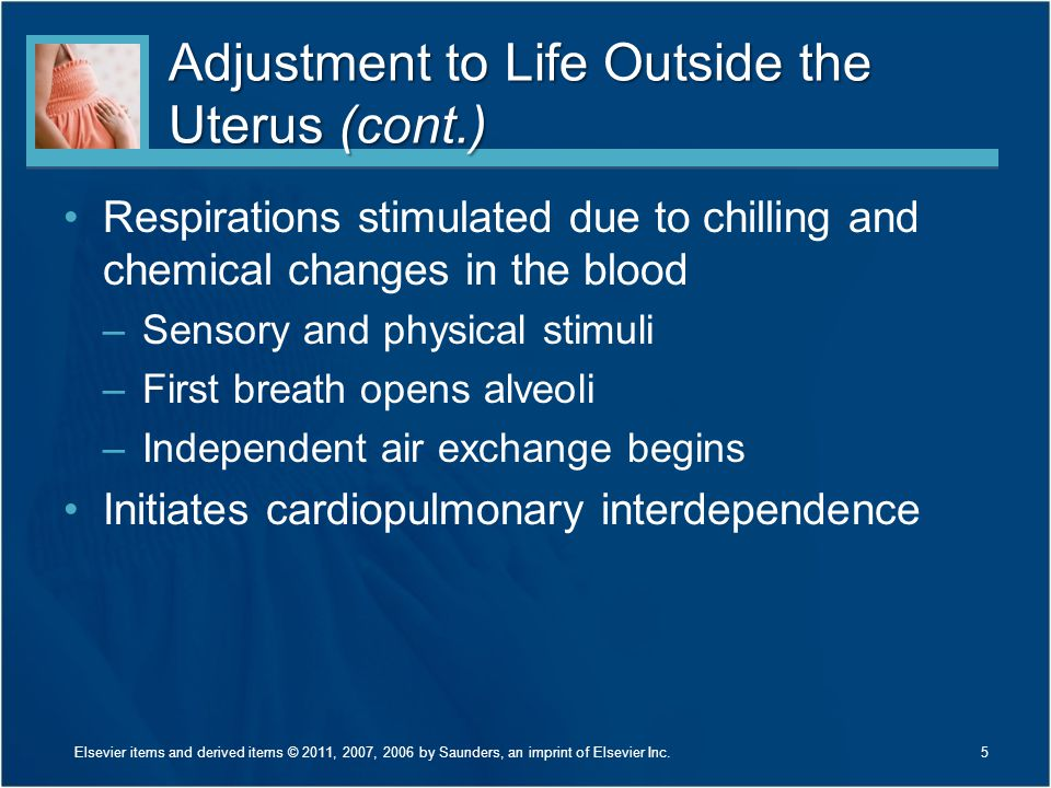 Adjustment to Life Outside the Uterus (cont.) Respirations stimulated due to chilling and chemical changes in the blood –Sensory and physical stimuli