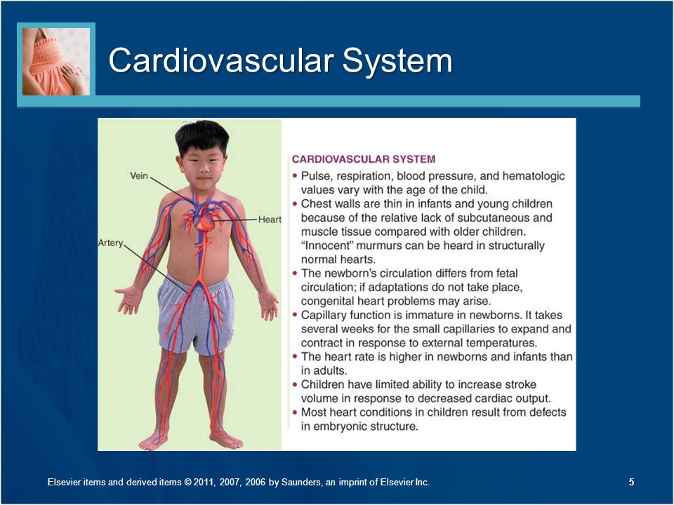 Cardiovascular System 5Elsevier items and derived items © 2011, 2007, 2006 by Saunders, an imprint of Elsevier Inc.