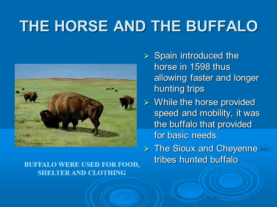 THE HORSE AND THE BUFFALO  Spain introduced the horse in 1598 thus allowing faster and longer hunting trips  While the horse provided speed and mobility, it was the buffalo that provided for basic needs.