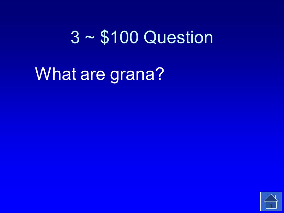 3 ~ $100 Answer The stacks of thylakoids in a chloroplast.
