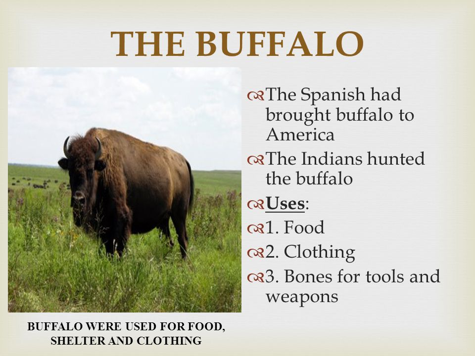 THE BUFFALO  The Spanish had brought buffalo to America  The Indians hunted the buffalo  Uses:  1. Food  2. Clothing  3. Bones for tools and wea