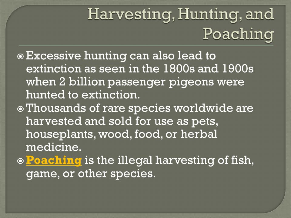  Excessive hunting can also lead to extinction as seen in the 1800s and 1900s when 2 billion passenger pigeons were hunted to extinction.  Thousands