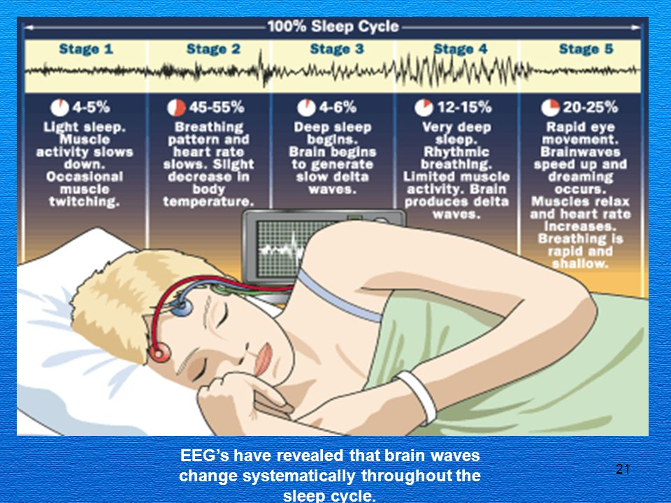 21 EEG's have revealed that brain waves change systematically throughout the sleep cycle.