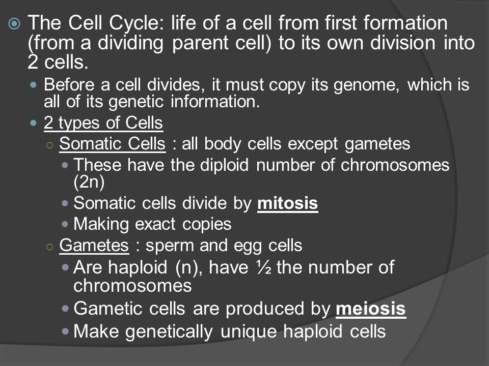  There are three main stages during a cell cycle:  Parts of the Cells Cycle Interphase ○ G1 - growth ○ S – DNA Replication ○ G2 – replicate organelles, more growth Mitosis ○ Prophase, Metaphase, Anaphase, Telophase Cytokinesis