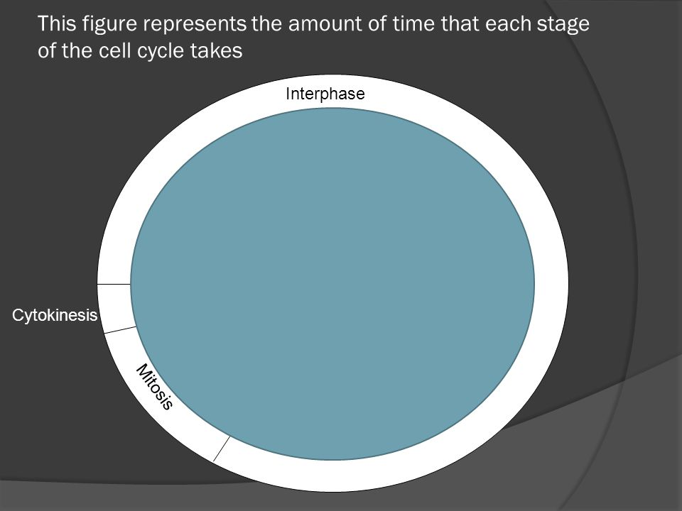Stage 1: Interphase (3 parts)  During this stage, a cell grows, copies its chromosomes, and prepares to divide.