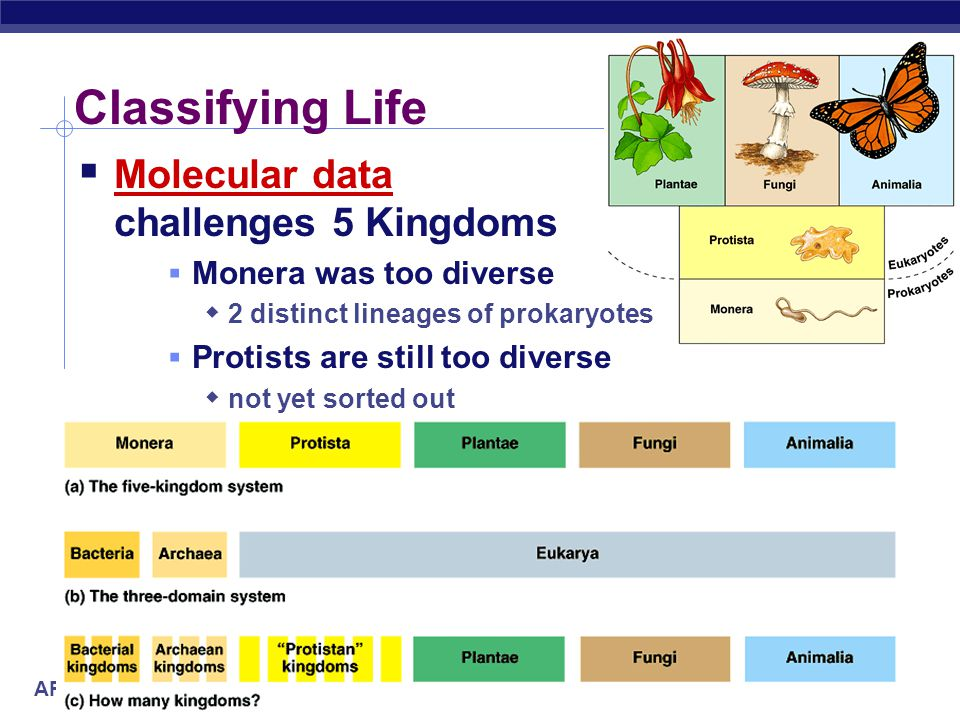 AP Biology Classifying Life  Molecular data challenges 5 Kingdoms  Monera was too diverse  2 distinct lineages of prokaryotes  Protists are still too diverse  not yet sorted out
