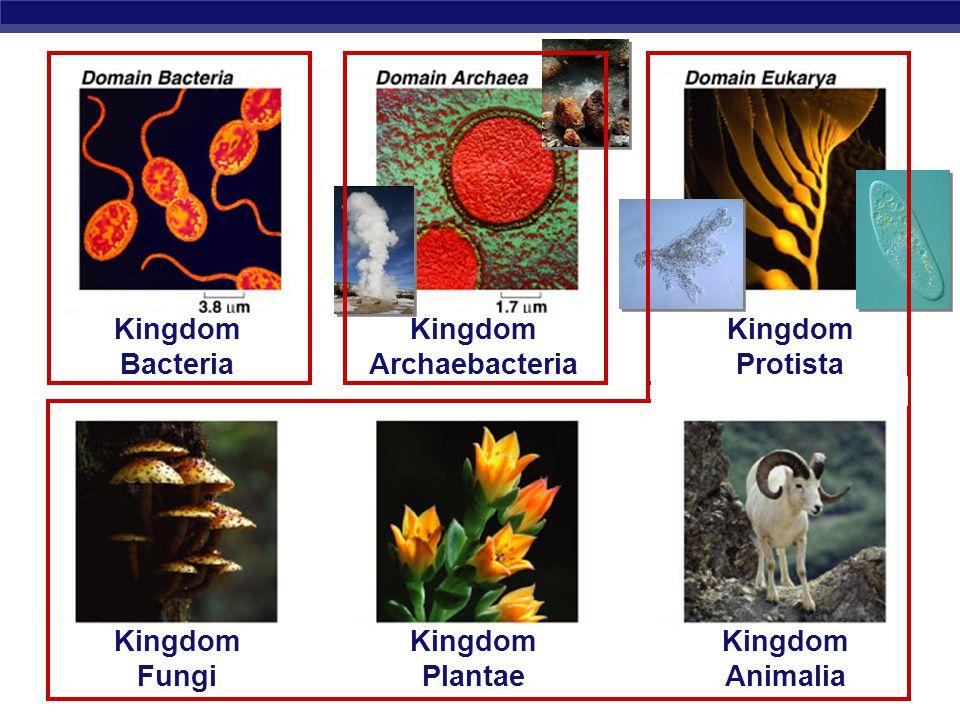 AP Biology Kingdom Protista Kingdom Fungi Kingdom Plantae Kingdom Animalia Kingdom Archaebacteria Kingdom Bacteria