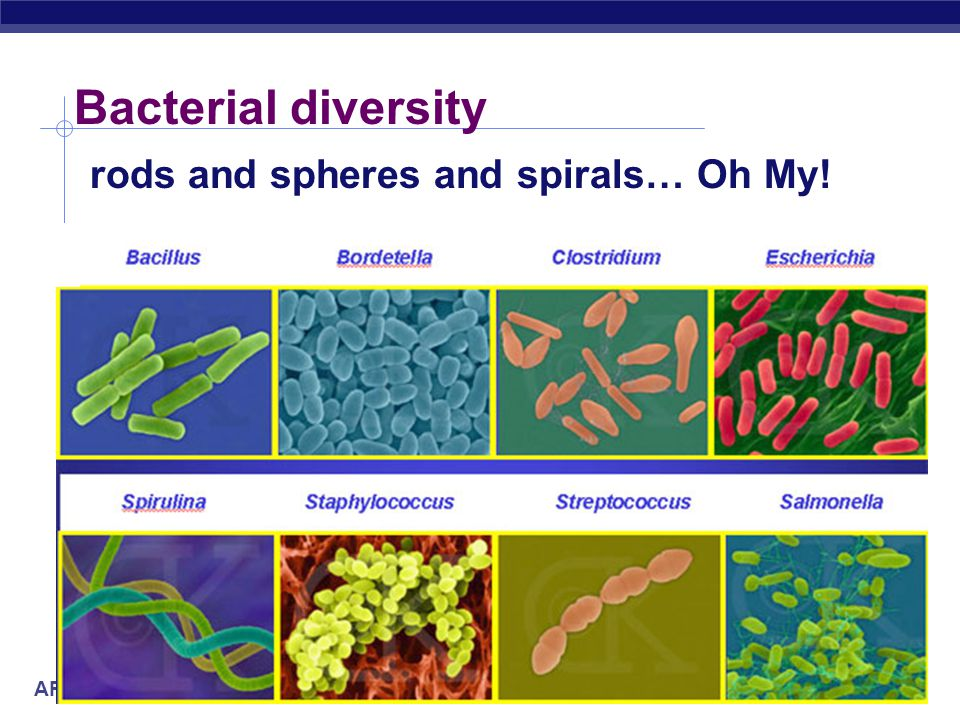 AP Biology Bacterial diversity rods and spheres and spirals… Oh My!