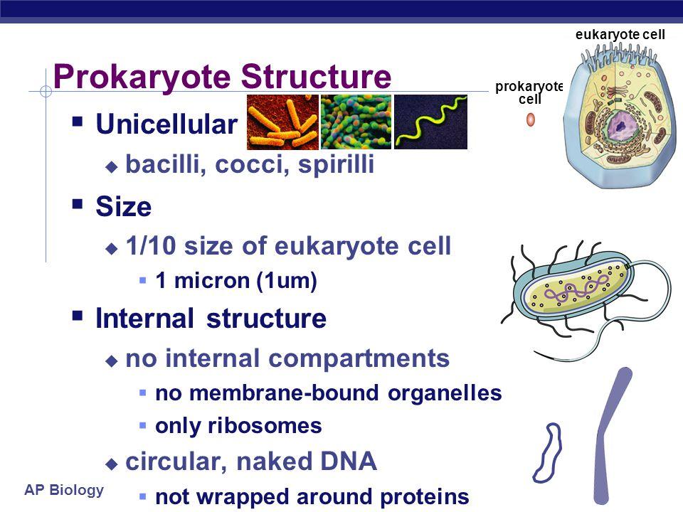 AP Biology Any Questions??