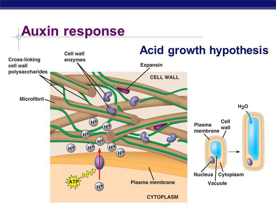AP Biology Auxin response Acid growth hypothesis