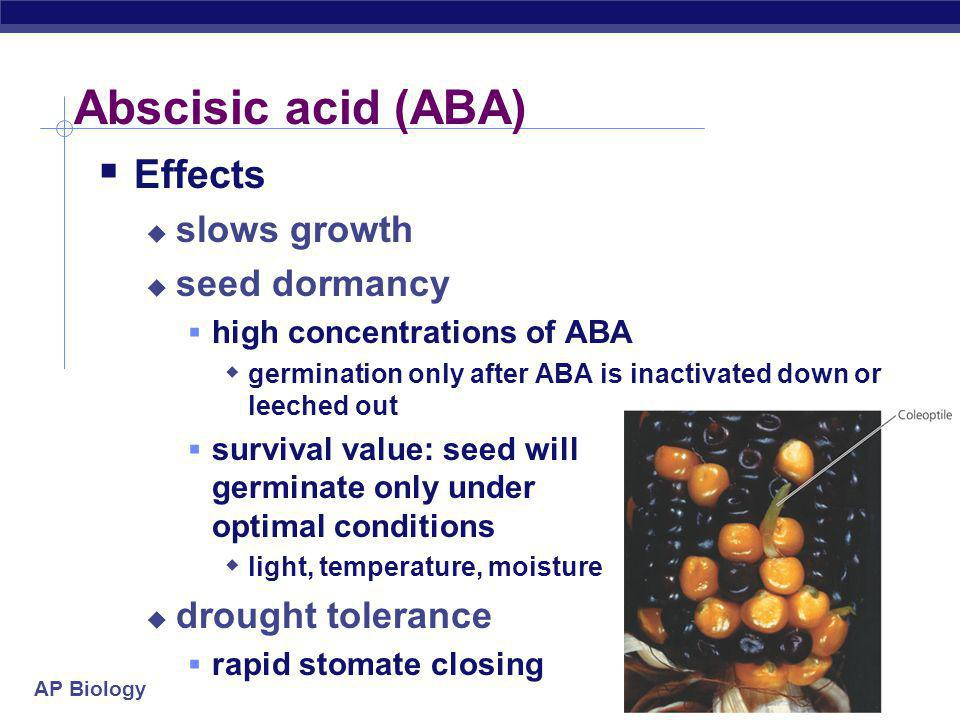 AP Biology Abscisic acid (ABA)  Effects  slows growth  seed dormancy  high concentrations of ABA  germination only after ABA is inactivated down or leeched out  survival value: seed will germinate only under optimal conditions  light, temperature, moisture  drought tolerance  rapid stomate closing
