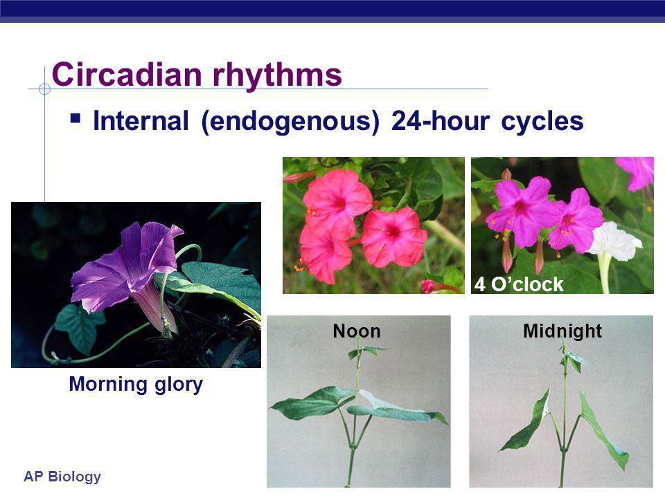 AP Biology Circadian rhythms  Internal (endogenous) 24-hour cycles Morning glory 4 O'clock NoonMidnight