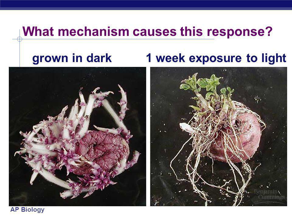 AP Biology What mechanism causes this response? grown in dark1 week exposure to light