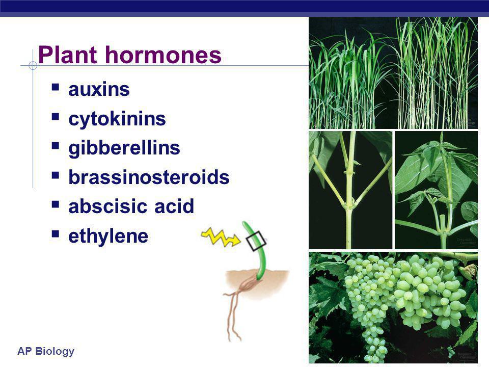 AP Biology Plant hormones  auxins  cytokinins  gibberellins  brassinosteroids  abscisic acid  ethylene
