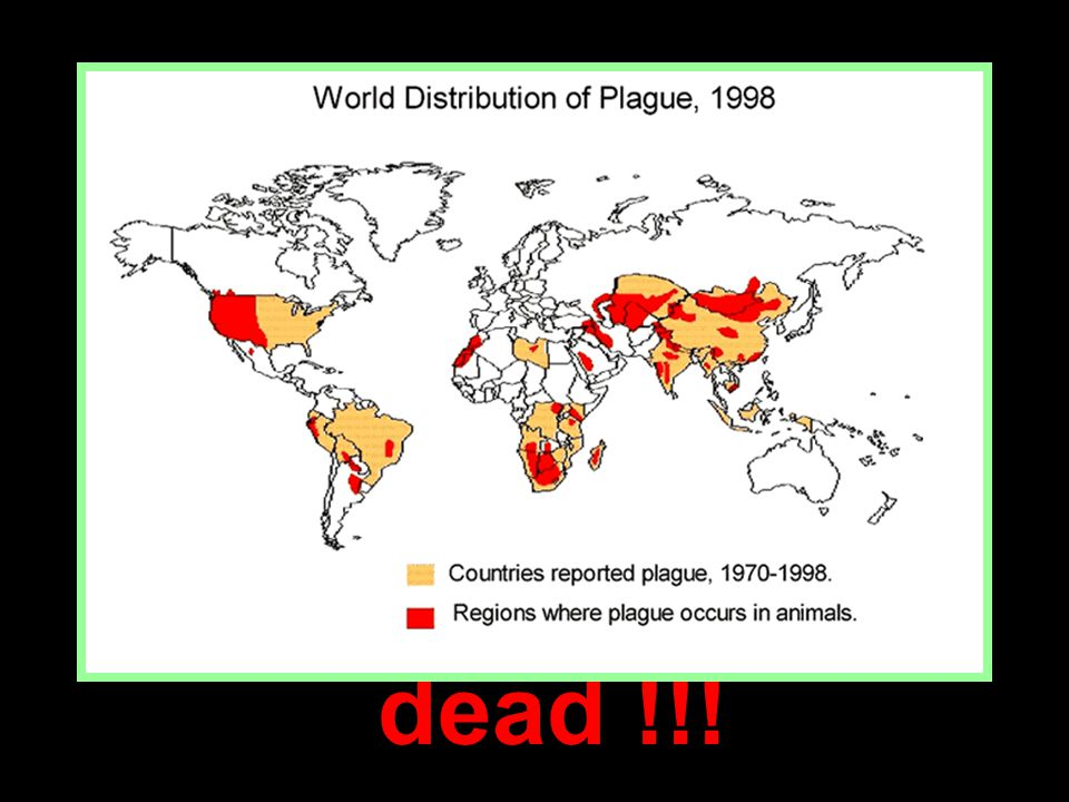 18 The effects of that plague and its successors on the men and women of medieval Europe were profound: new attitudes toward death, the value of life, and of one s self.