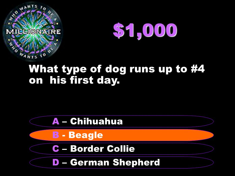 $1,000 What type of dog runs up to #4 on his first day.