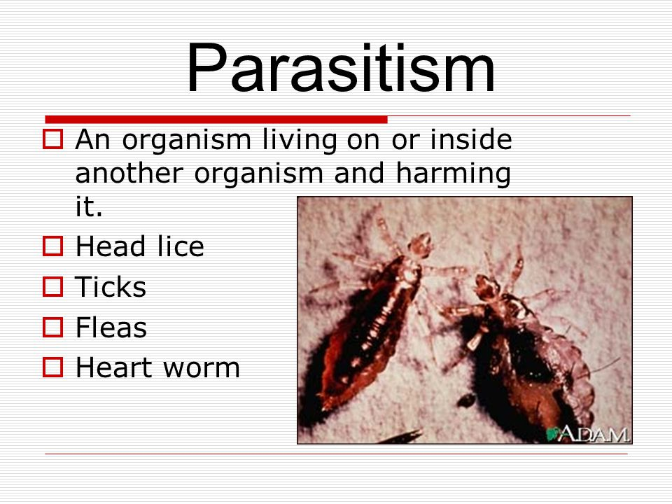  An organism living on or inside another organism and harming it.
